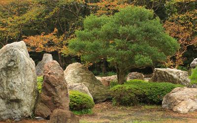 Tree between rocks wallpaper