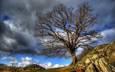 Tree growing next to a rock peak wallpaper