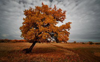 Tree in Autumn wallpaper 1920x1200 jpg