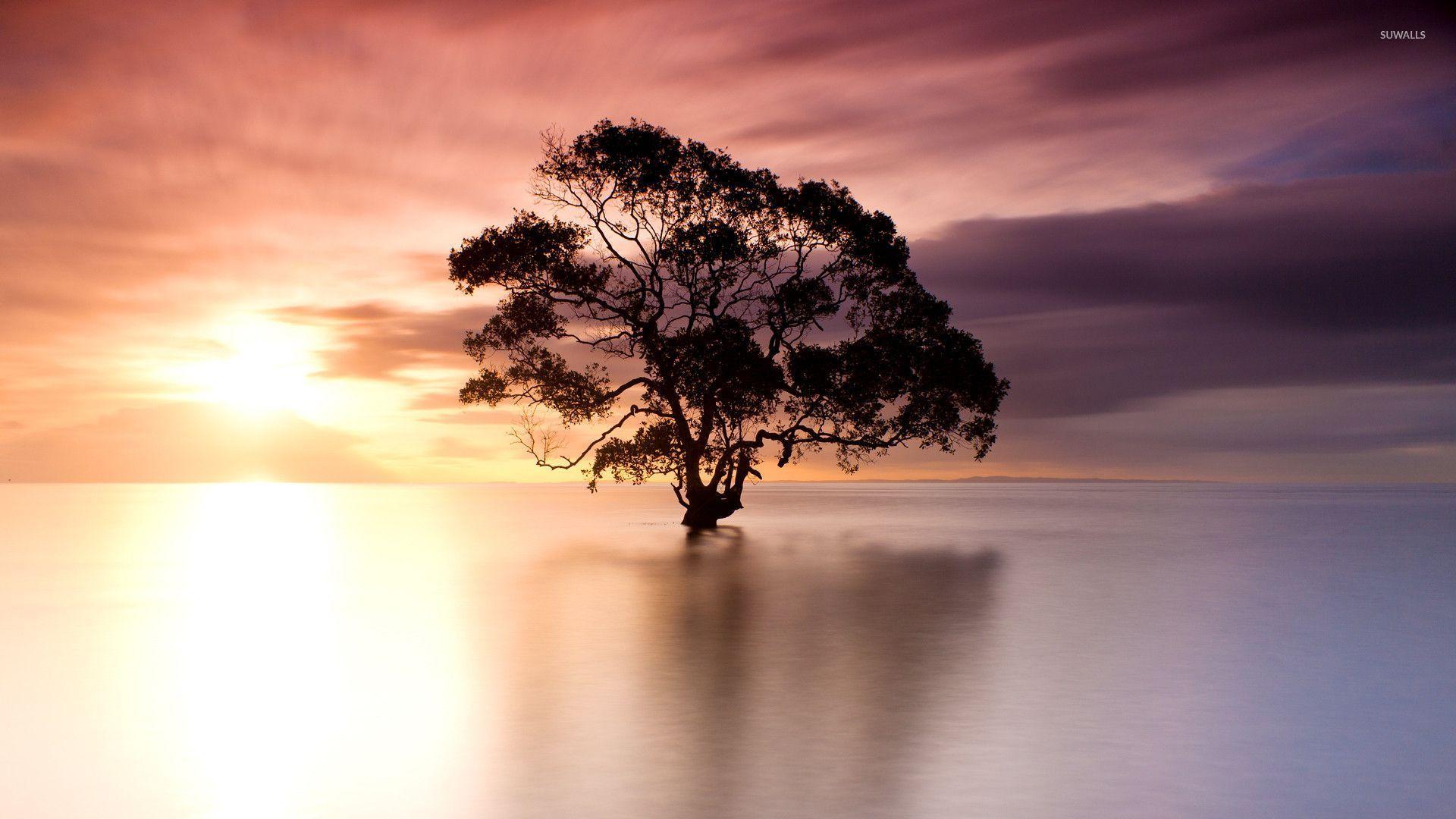 Tree In Nudgee Beach Australia Wallpaper Nature