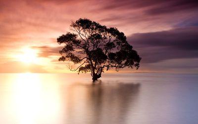 Tree in Nudgee Beach, Australia Wallpaper