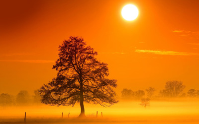 Tree in the morning mist wallpaper