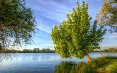 Tree leaning to the water wallpaper