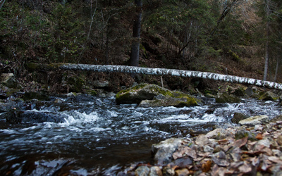 Tree log above the mountain river Wallpaper