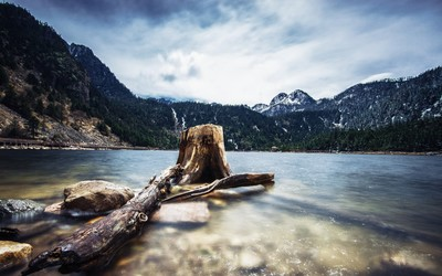 Tree log in the rocky mountain lake wallpaper