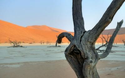 Tree logs on arid ground by the desert wallpaper