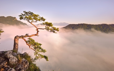 Tree on top of the cliff wallpaper