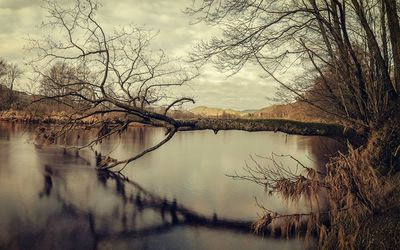 Tree reaching into the river wallpaper