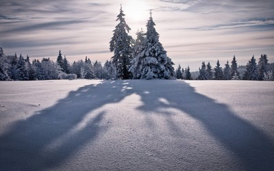 Tree shadowing on the snow wallpaper