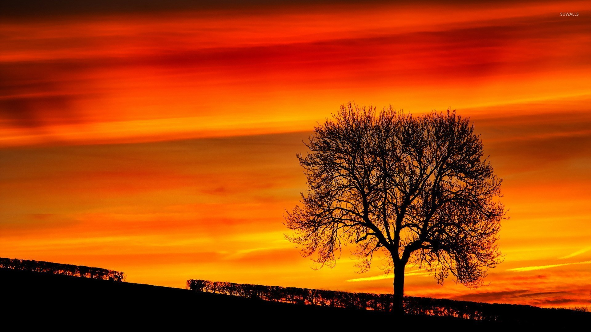 Trees Silhouette Sunset Tree silhouette in the...