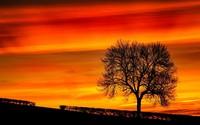 Tree silhouette in the sunset wallpaper 1920x1080 jpg