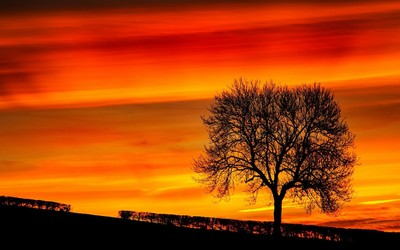 Tree silhouette in the sunset wallpaper