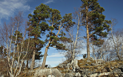 Trees growing on top of the rocky hills Wallpaper