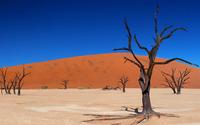Trees in the desert wallpaper 1920x1200 jpg