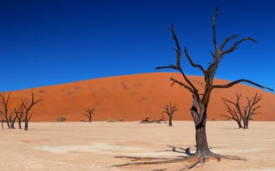 Trees in the desert wallpaper