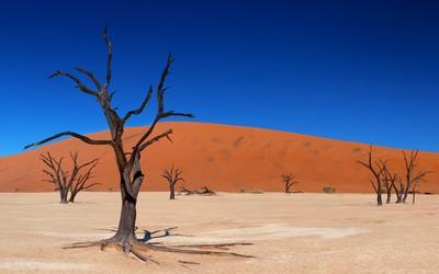 Trees in the desert [2] wallpaper