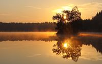 Trees in the foggy lake at sunset wallpaper 2560x1600 jpg