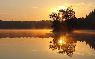 Trees in the foggy lake at sunset wallpaper