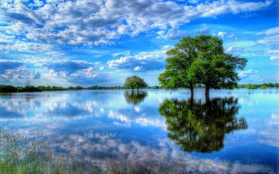 Trees in the water wallpaper