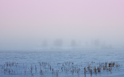 Trees lost in the fog wallpaper