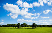 Trees on the green field wallpaper 2560x1600 jpg