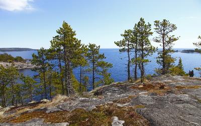 Trees on the rocky ocean shore wallpaper
