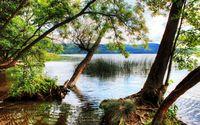 Trees reaching to the lake wallpaper 2560x1600 jpg