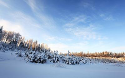 Trees under snow wallpaper