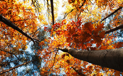Treetops wallpaper