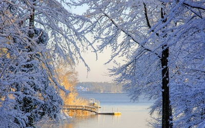 Warm sun reflected on the snowy trees by the lake wallpaper