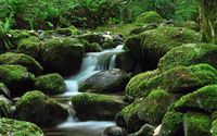 Water falling through the mossy rock wallpaper 2560x1600 jpg