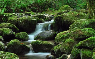 Water falling through the mossy rock wallpaper