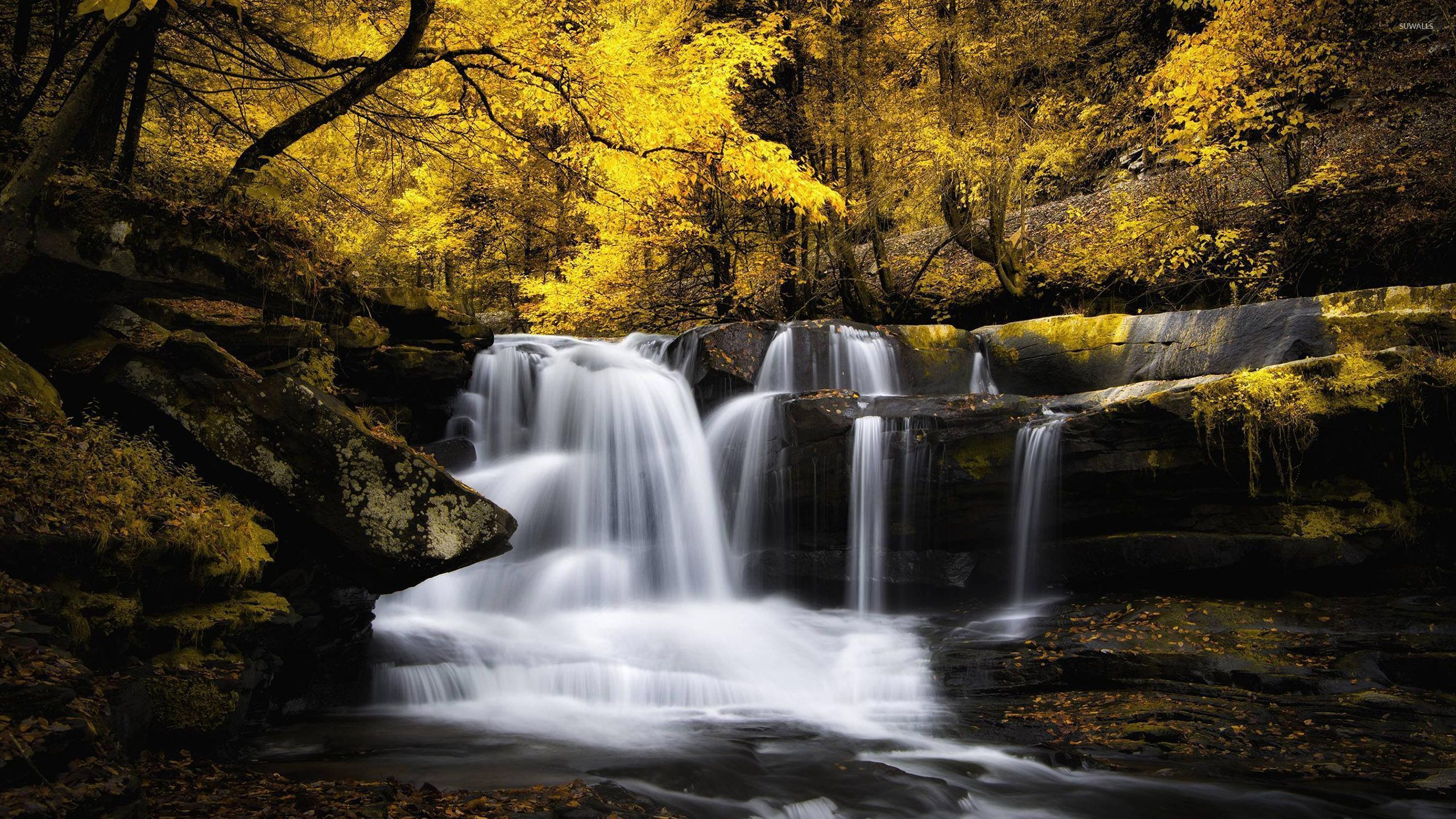 fall woods backgrounds wallpapers - photo #33