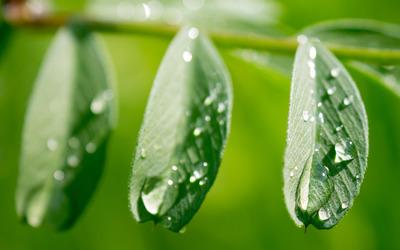 Wet leaves wallpaper