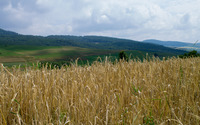 Wheat field on the hillside wallpaper 2880x1800 jpg