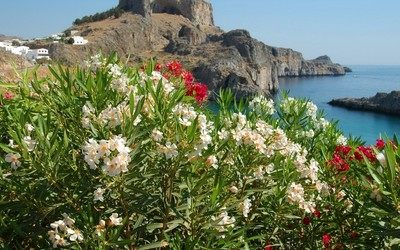 White and red blossoms on the Greece shore wallpaper