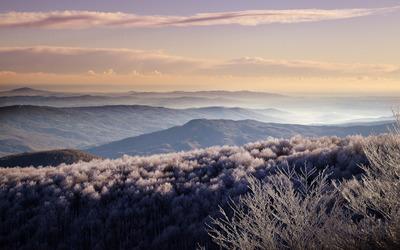 White forest mountain wallpaper