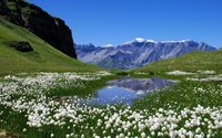 White peaks reflecting in the lake by the white blossoms wallpaper 2560x1600 jpg