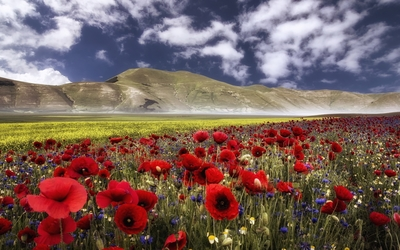 Wild flowers mixed in the field by the hill Wallpaper