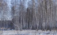Winter birch forest wallpaper 3840x2160 jpg