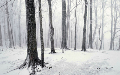 Winter in the forest wallpaper