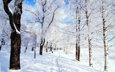Winter in the park wallpaper
