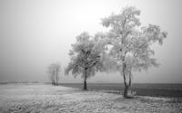 Winter landscape [6] wallpaper 1920x1200 jpg