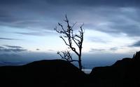 Winter tree at sunset wallpaper 1920x1200 jpg