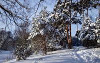 Winter trees wallpaper 1920x1200 jpg