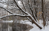 Winter trees leaning to the water wallpaper 3840x2160 jpg