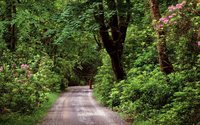 Wood road in County Galway wallpaper 1920x1200 jpg