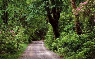 Wood road in County Galway wallpaper