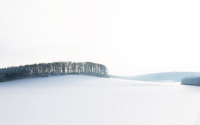 Woods  in the white land wallpaper