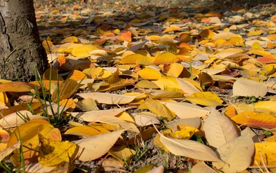 Yellow and orange leaves on the ground wallpaper